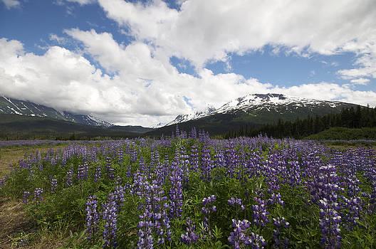Violet Valley by Steven Colella