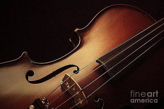 Violin by Linda Fowler