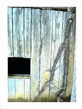 Virginia Barn by Suzanne Fenster