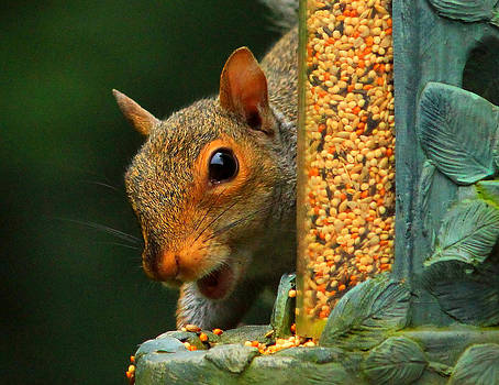 Visitor at the Feeder by Cathy Leite Photography
