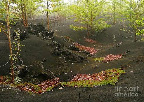 Volcanic scenery by Bernard MICHEL