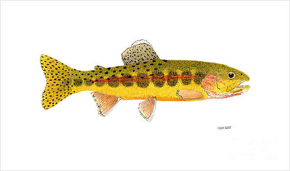 Volcano Creek Golden Trout by Thom Glace