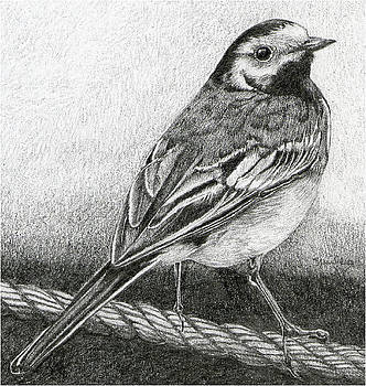 'Wagtail Watching' by Sue  Miles