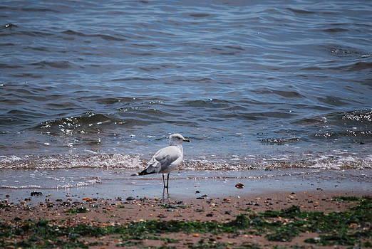 Michelle Cruz - Waiting by the Sea