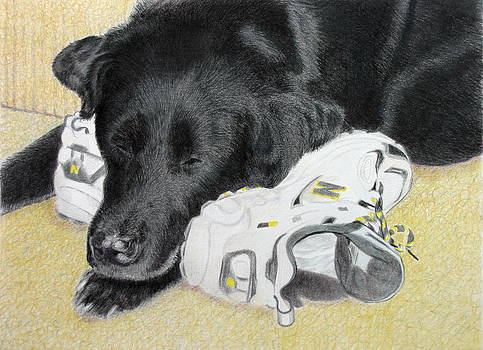 Wake me for the walk by Vera Rodgers
