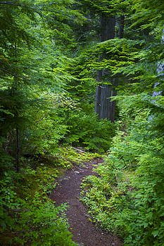 Walk in the Forest by Sylvia Hart