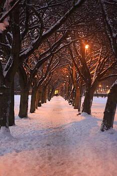 Walk to Wonderland by Andrew John Rees