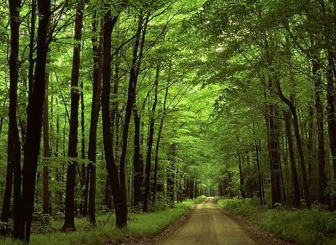 Walking Away Forest Path  by ilendra Vyas