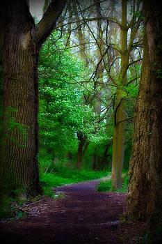 Rebecca Frank - Walking Path