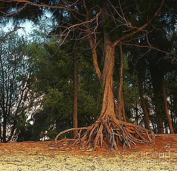 Herb Paynter - Walking Trees