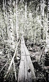 Darcy Michaelchuk - Walkway into the Amazon