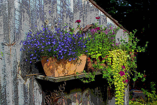 Wall Garden by Bob Whitt