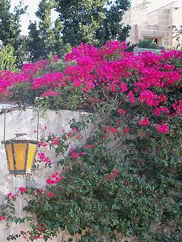 Wall of Flowers in Malta by Sandy Collier