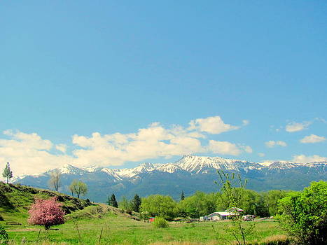 Wallowa Mountains with Cherry tree by Amy Bradley
