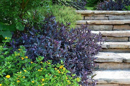 Wandering Plants by Kathy Lewis