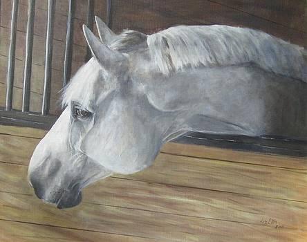 Warm Blood Stallion by Elizabeth Ellis