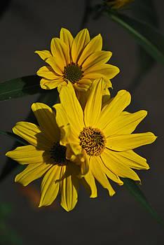Michelle Cruz - Warmth in Yellow