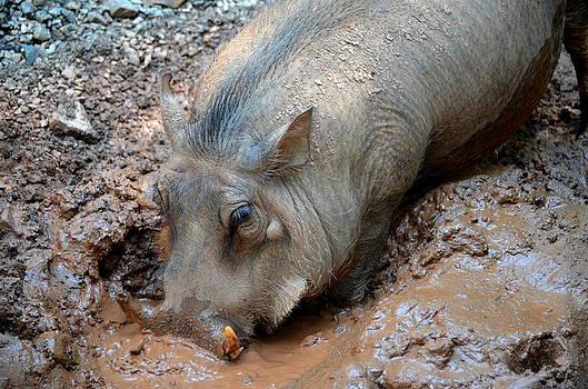 Ronald T Williams - Wart Hog