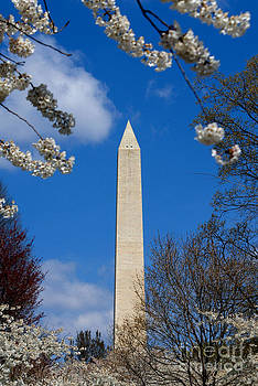 Washington Monument in the Spring by Angela DiPietro