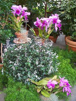 Washington Orchids by Valerie Longo