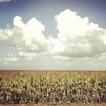Watch My Corn Pop Up In Rows. #texas by Victoria Haas