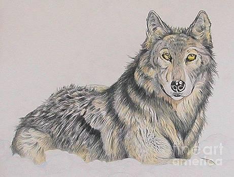 Watchful Eyes by Kimberlee  Ketterman Edgar