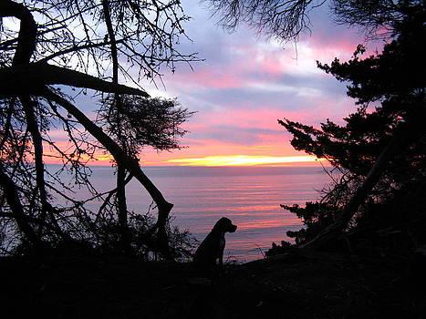 Watching the Sun Set by Ian Stevenson