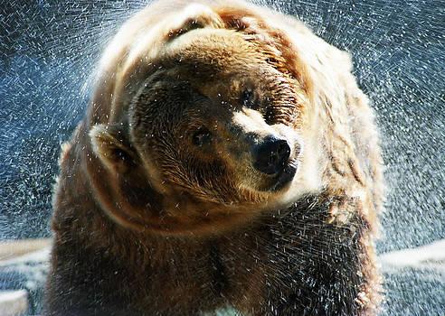 Water Bear by CJ Clark