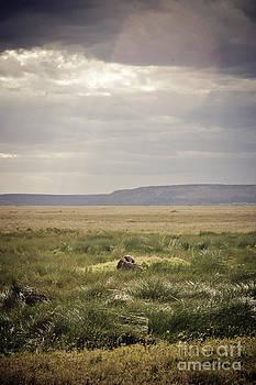 Darcy Michaelchuk - Water Buffalo in a Spot of Sun