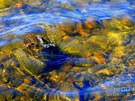 Water Circle by Leela Arnet