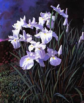 Water Iris by Robert Foster