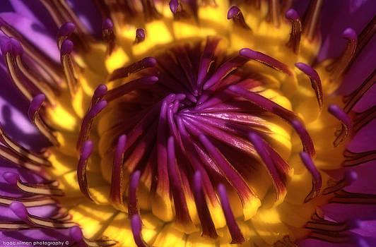 Isaac Silman - Water Lily 3