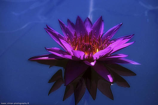 Isaac Silman - Water Lily 9