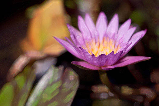 Water Lily by Darren Strubhar