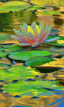 Diana Cox - Water Lily
