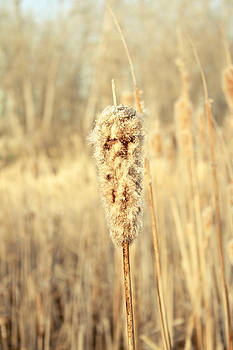 Water Reed by Rebbecca Romine