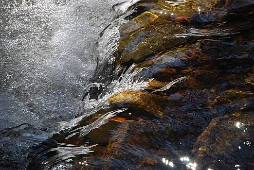 Water Reflections by Stephanie Dobbins