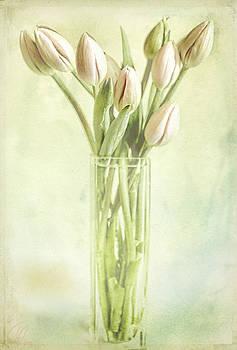 Watercolour Tulips  by Margaret Hormann Bfa