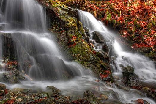Waterfall In Beech Forest by George Cislariu