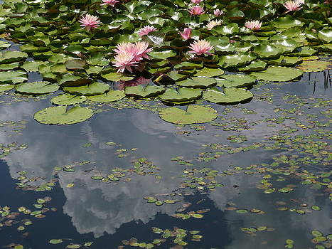 Angela Hansen - waterlilies and lily pads