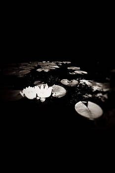 Waterlilies by Rick Ryan