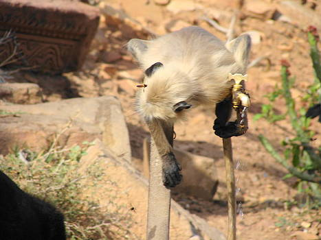 Water....The Basic Need by Hemant Raj Singh