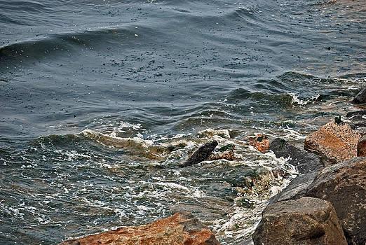 Michelle Cruz - Waves Hitting the Rocks