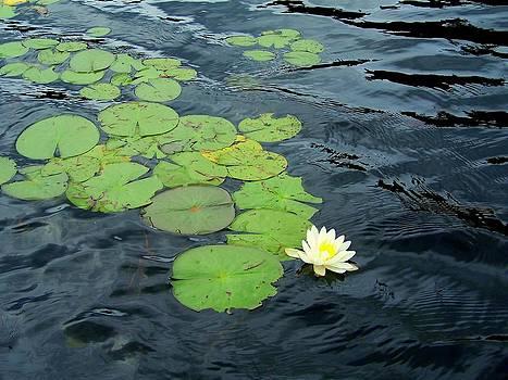 Waving Lily Pads by Kristal Kobold