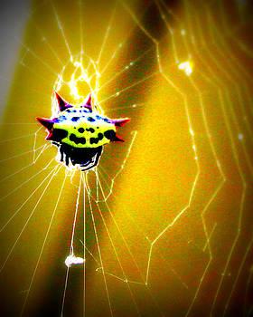 Web Design too by LC  Linda Scott