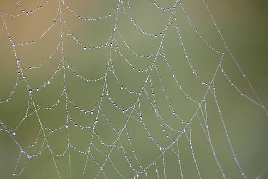 Cathie Douglas - Web Drops