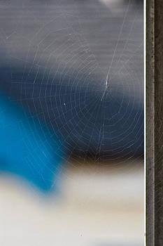 Web by Long Nguyen