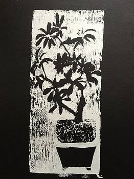 Wedding Tree by Jennifer Woodworth