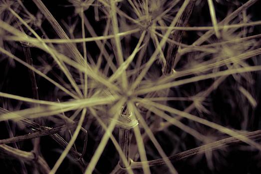 Weeds 1 by Grebo Gray