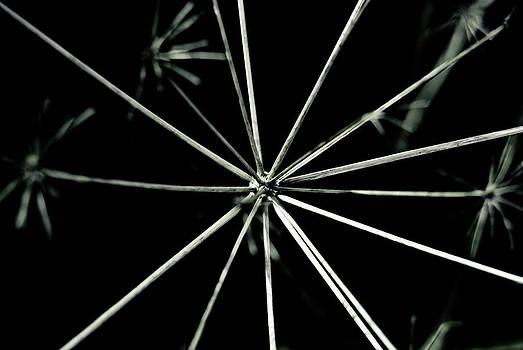 Weeds 2 by Grebo Gray